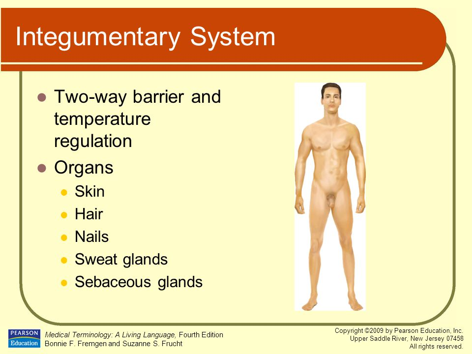 Integumentary System Two-way barrier and temperature regulation Organs