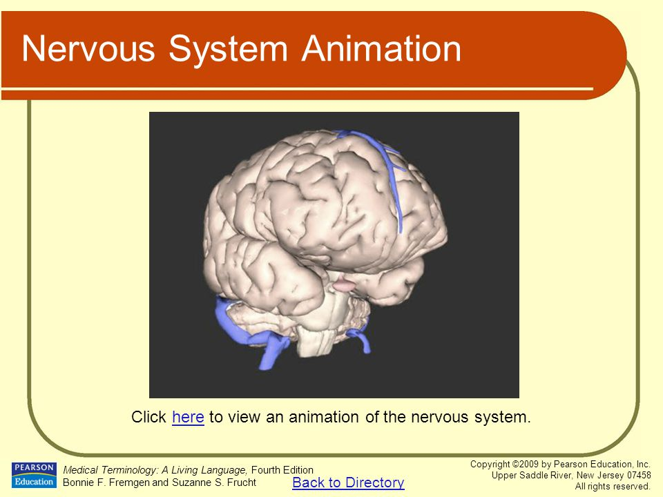 Nervous System Animation