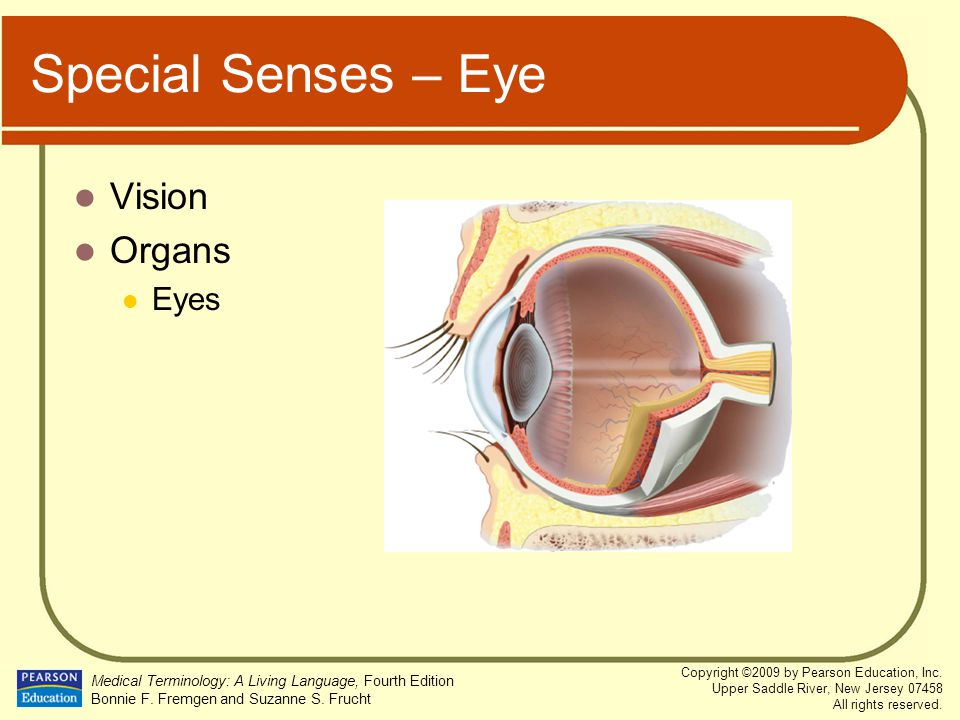 Special Senses – Eye Vision Organs Eyes