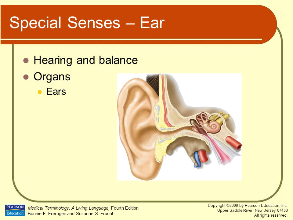 Special Senses – Ear Hearing and balance Organs Ears