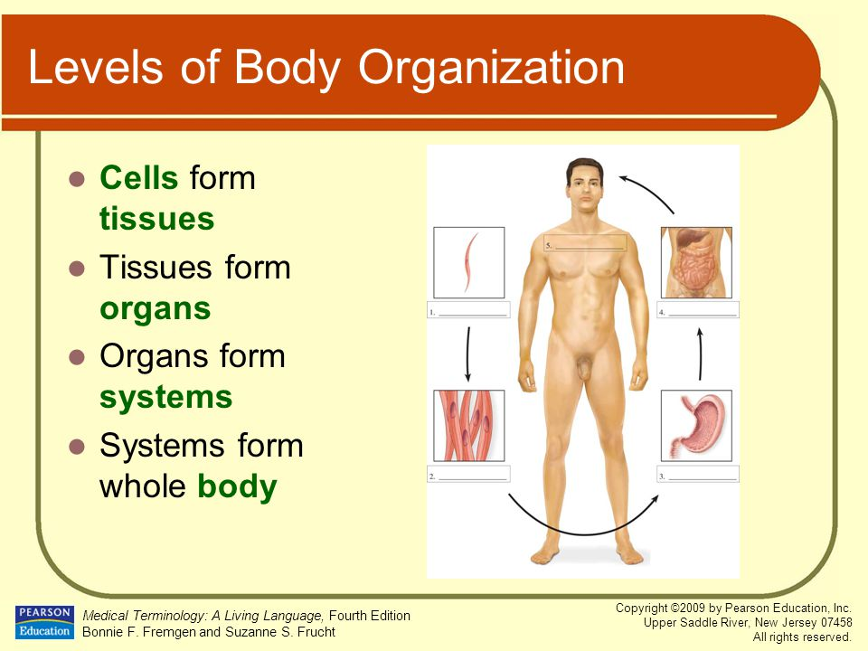 Levels of Body Organization