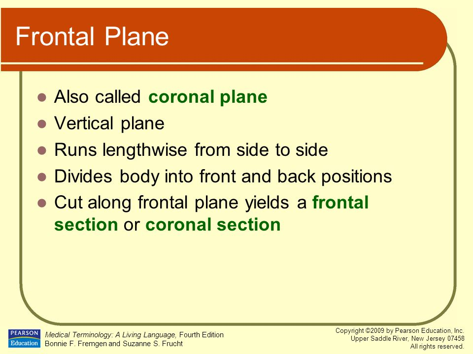Frontal Plane Also called coronal plane Vertical plane