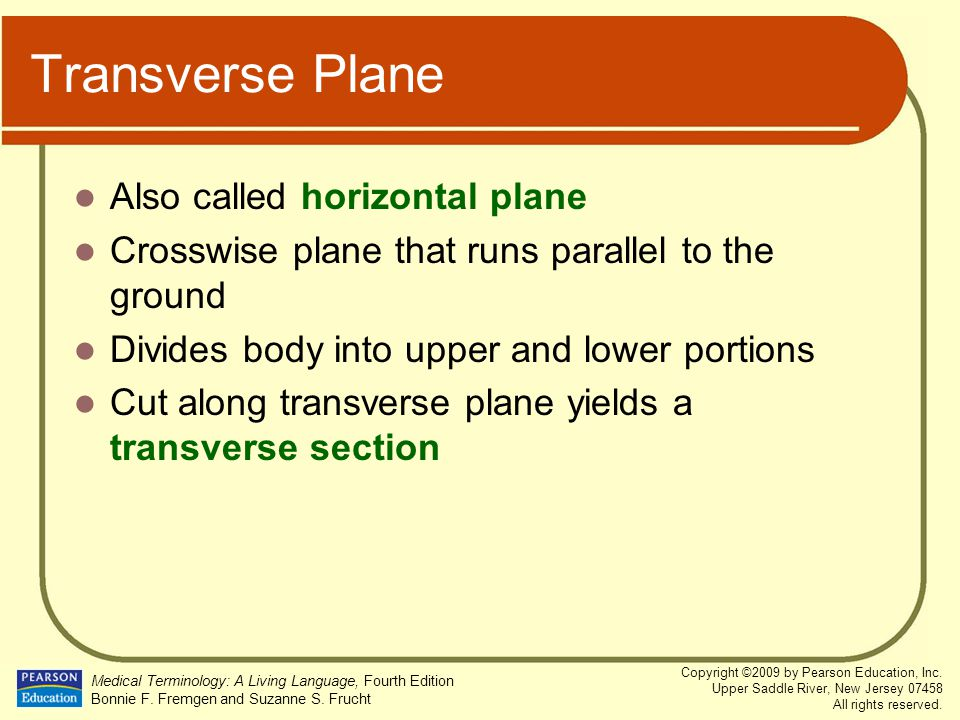 Transverse Plane Also called horizontal plane