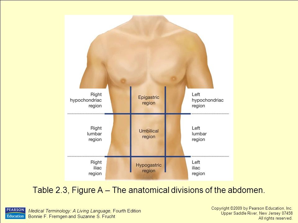 Table 2.3, Figure A – The anatomical divisions of the abdomen.
