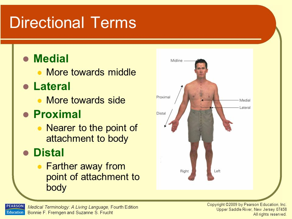 Directional Terms Medial Lateral Proximal Distal More towards middle