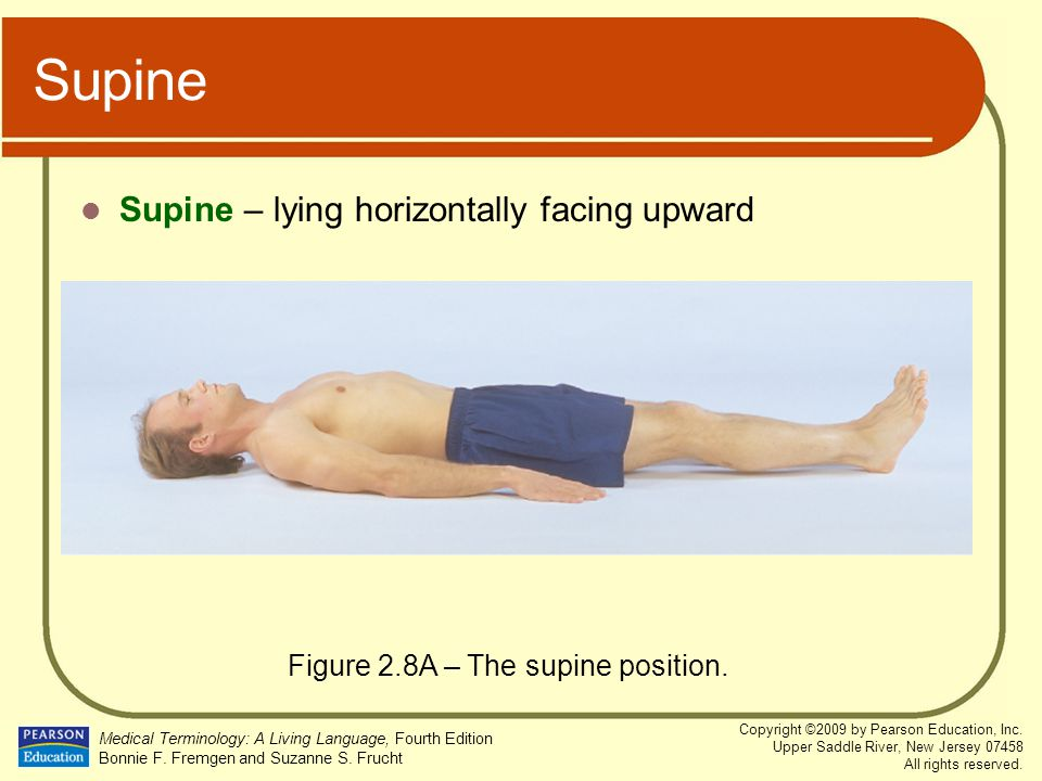 Figure 2.8A – The supine position.