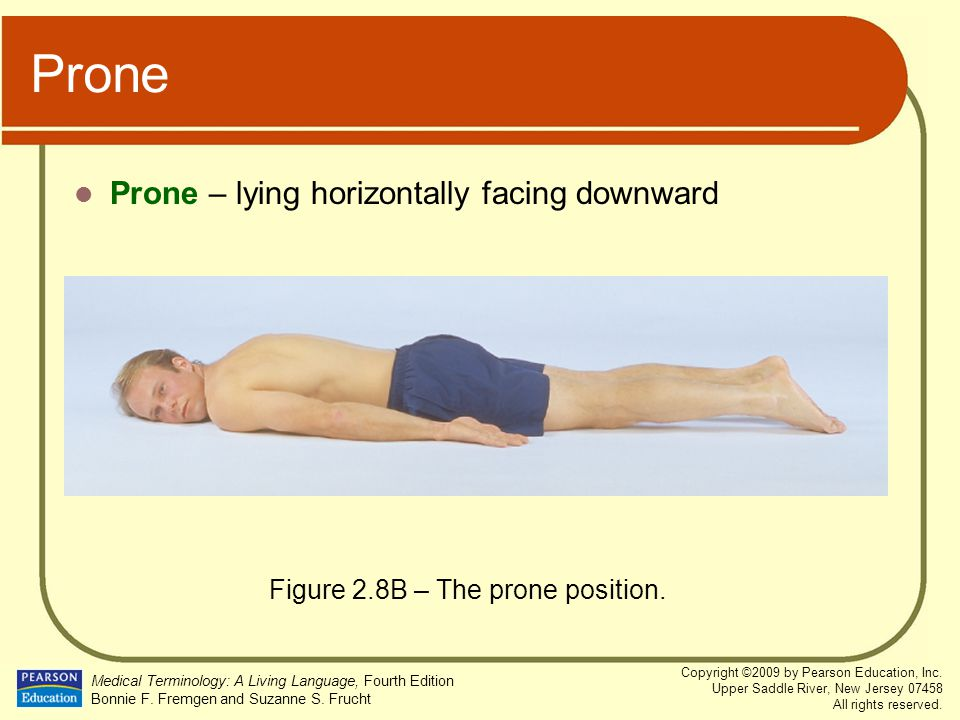Figure 2.8B – The prone position.