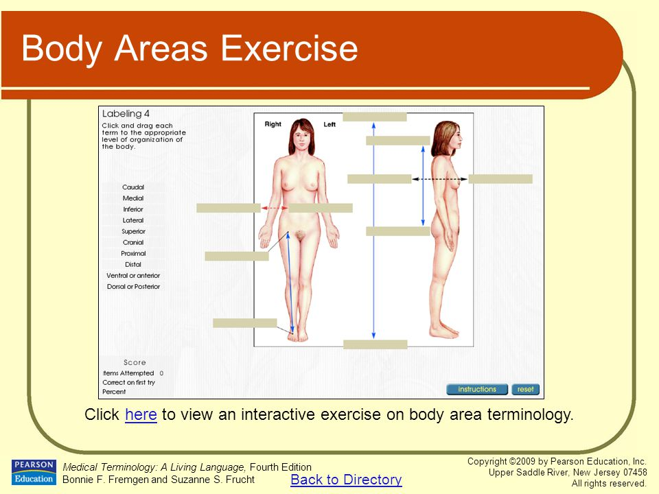Click here to view an interactive exercise on body area terminology.