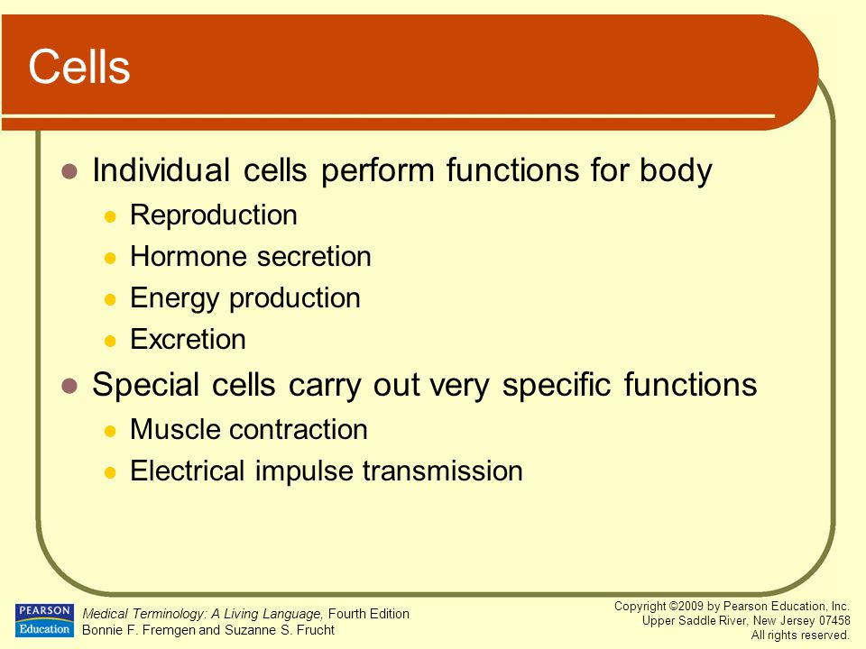 Cells Individual cells perform functions for body