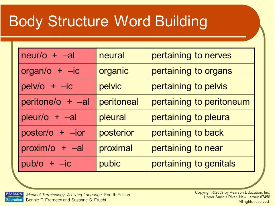 Body Structure Word Building