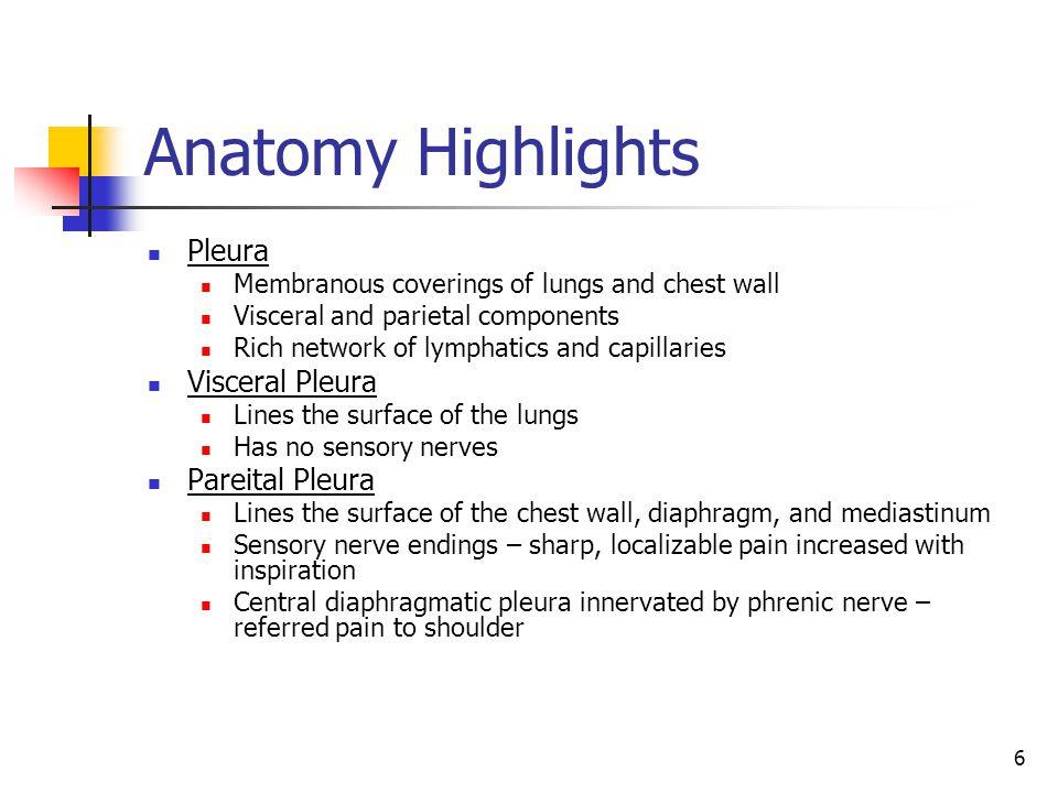 Anatomy Highlights Pleura Visceral Pleura Pareital Pleura