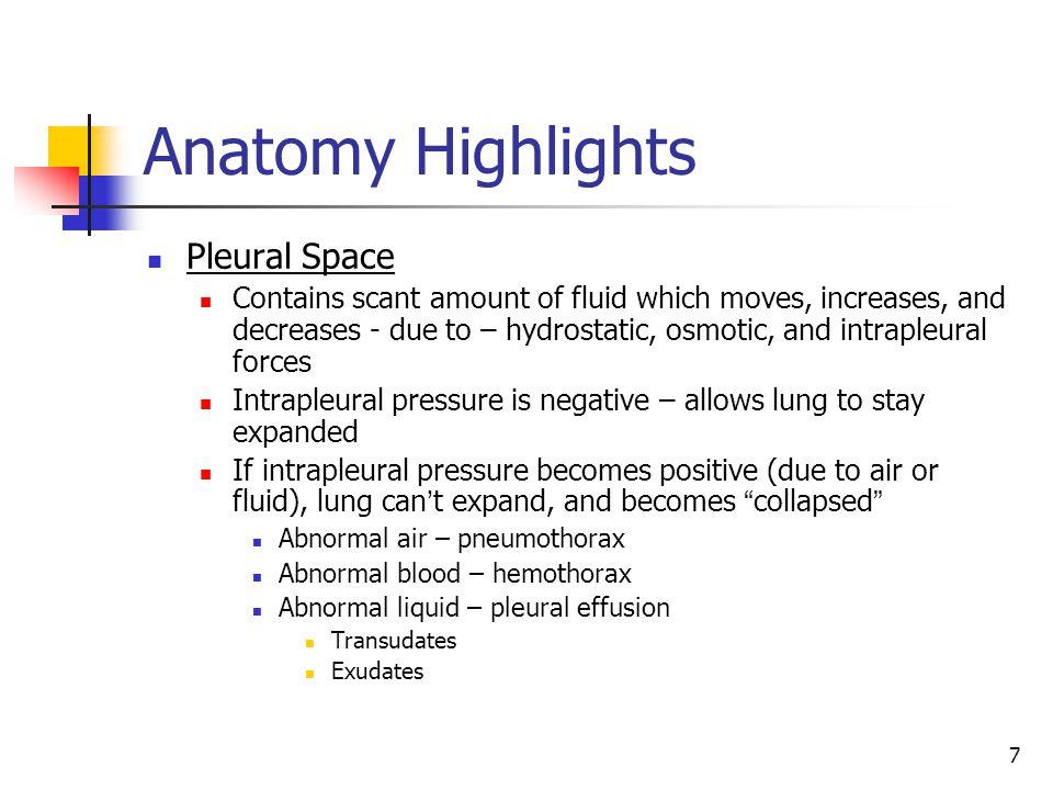 Anatomy Highlights Pleural Space