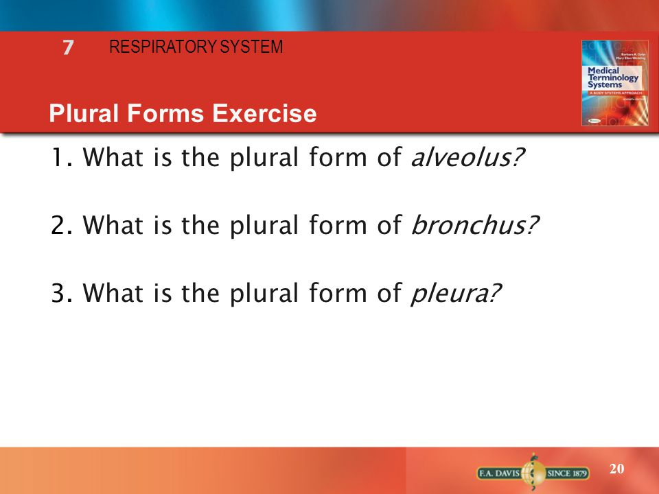 What is the plural form of alveolus