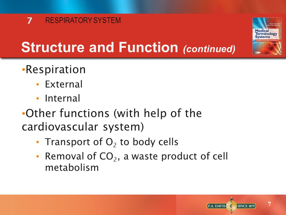 Structure and Function (continued)