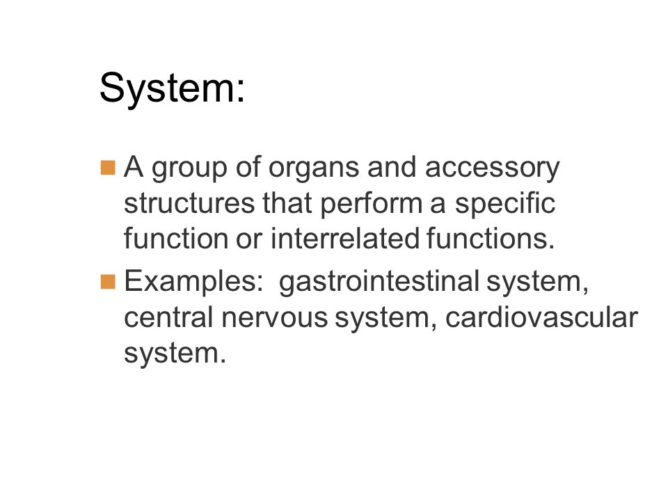 System: A group of organs and accessory structures that perform a specific function or interrelated functions.