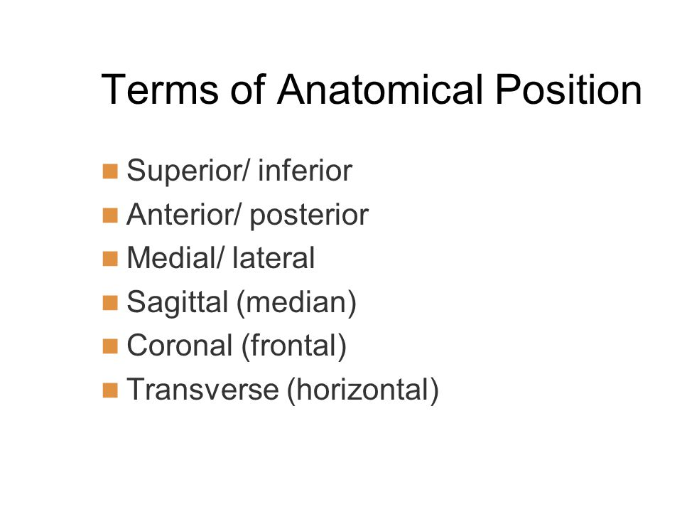 Terms of Anatomical Position