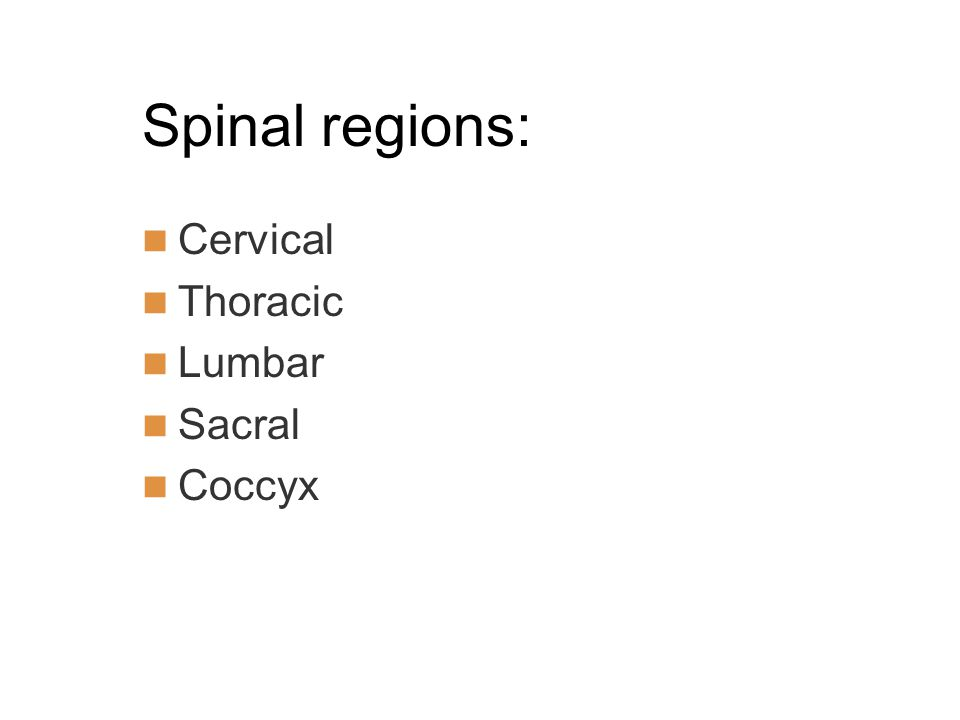 Spinal regions: Cervical Thoracic Lumbar Sacral Coccyx
