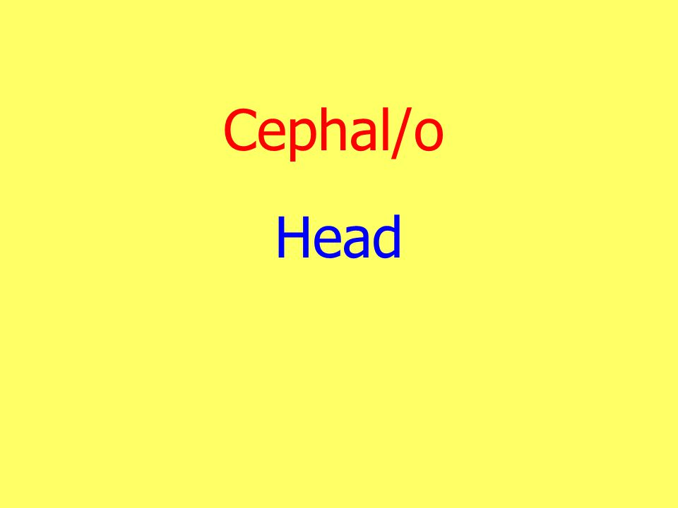Cephal/o Head