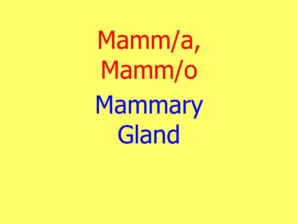 Mamm/a, Mamm/o Mammary Gland