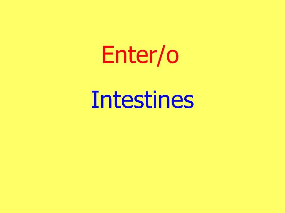 Enter/o Intestines
