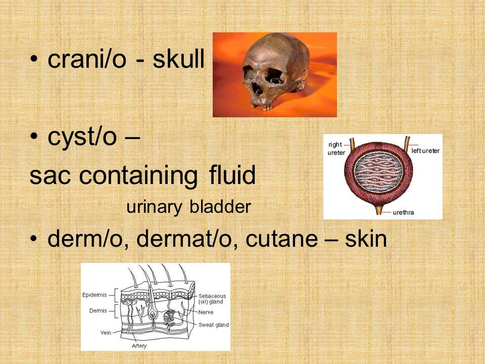 crani/o - skull cyst/o – sac containing fluid