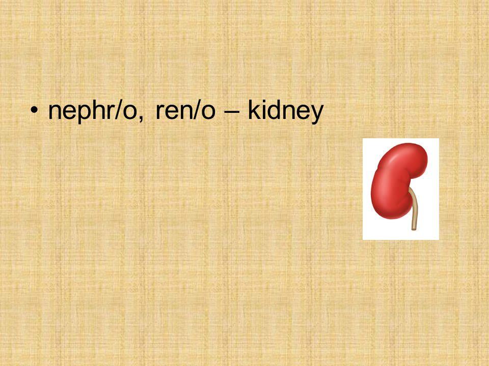 nephr/o, ren/o – kidney