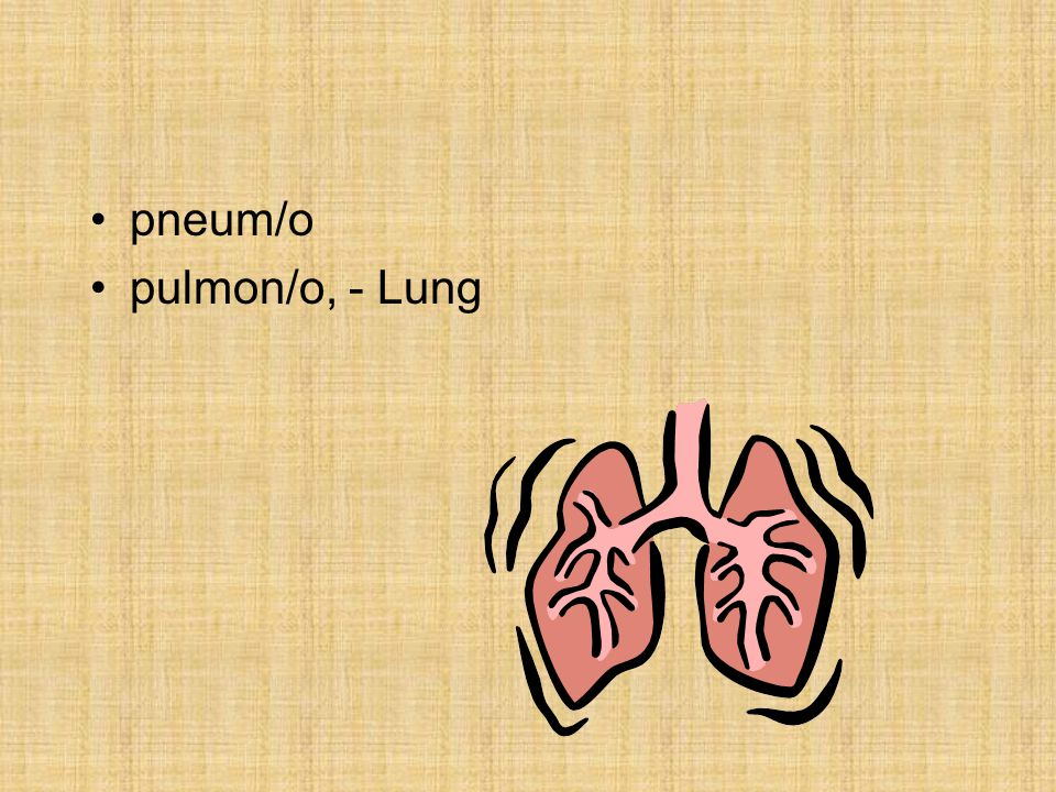 pneum/o pulmon/o, - Lung