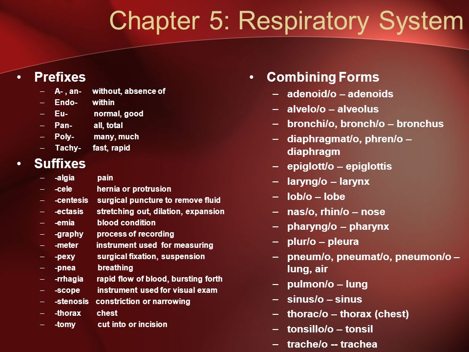 Chapter 5: Respiratory System