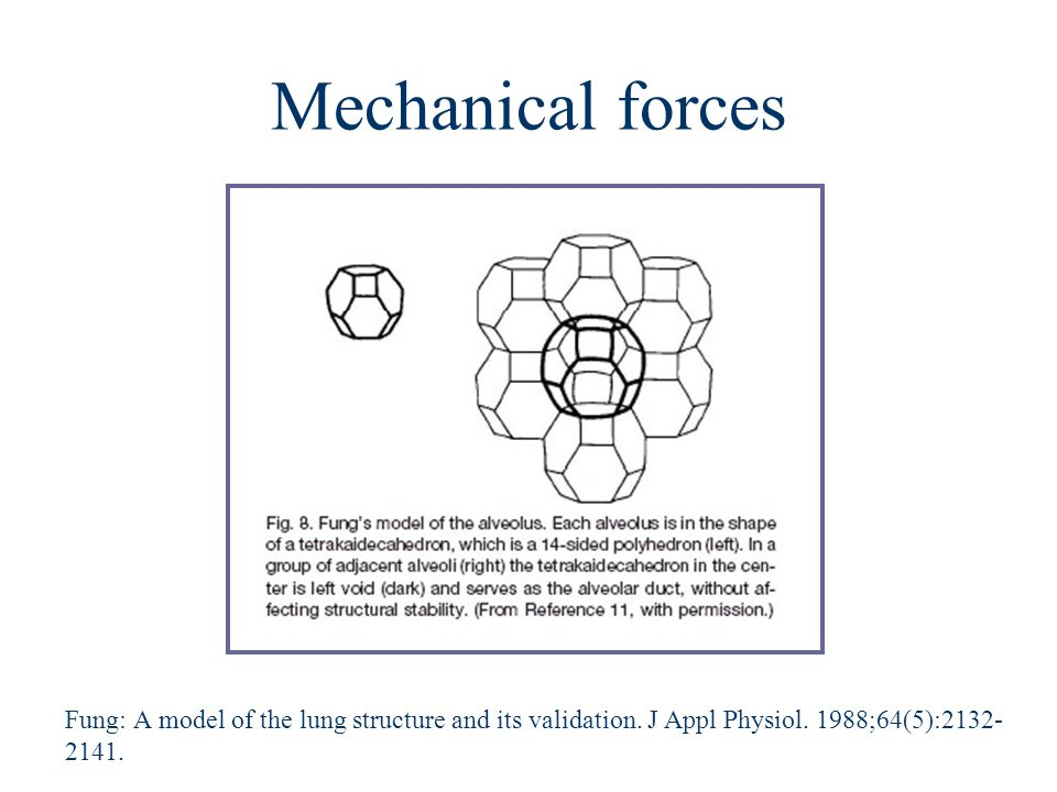 Mechanical forces Fung: A model of the lung structure and its validation.