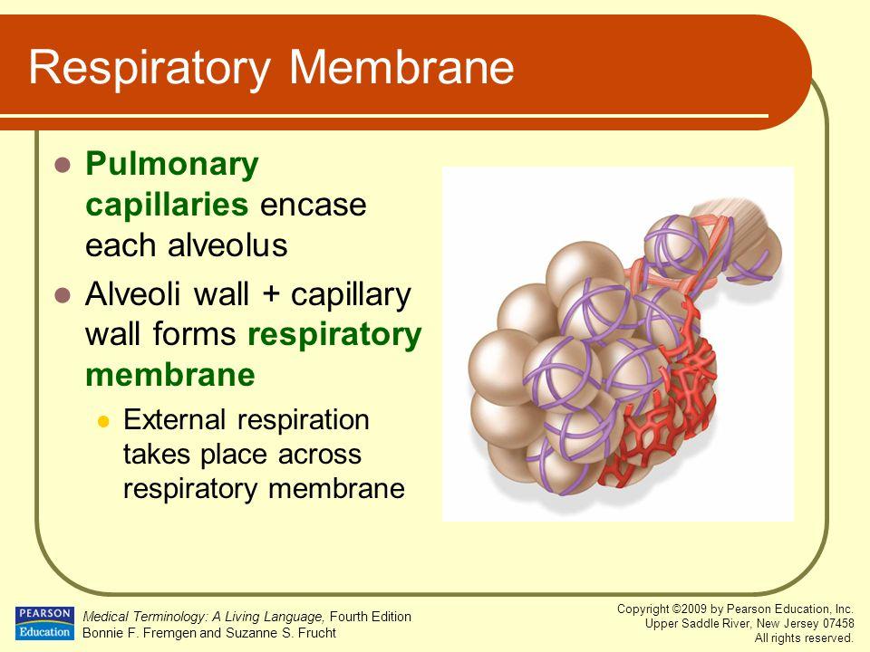 Respiratory Membrane Pulmonary capillaries encase each alveolus
