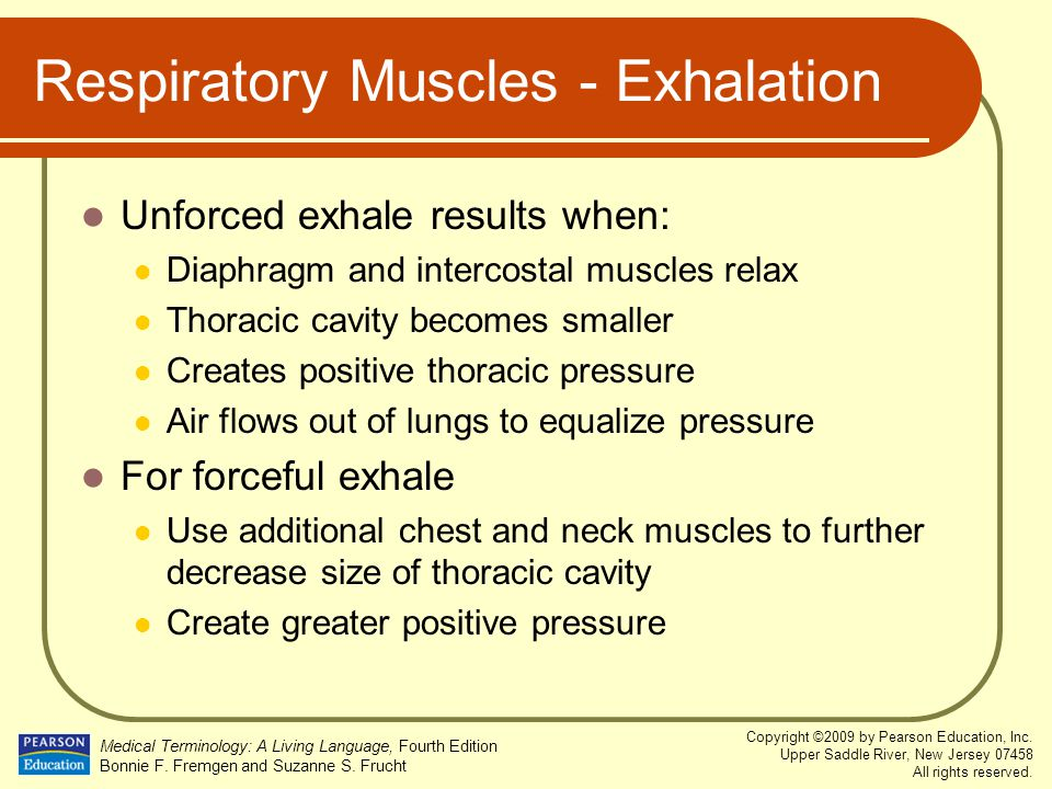 Respiratory Muscles - Exhalation