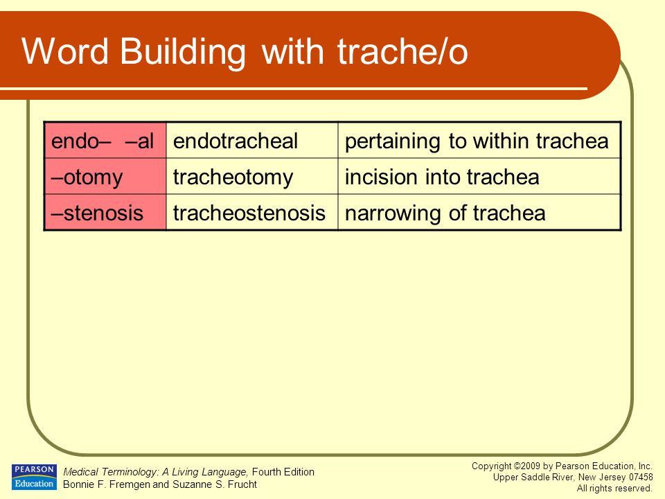Word Building with trache/o