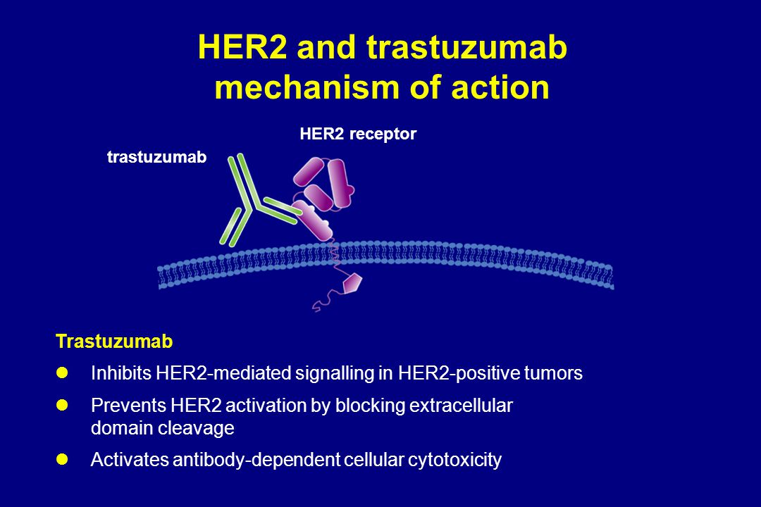 HER2 and trastuzumab mechanism of action