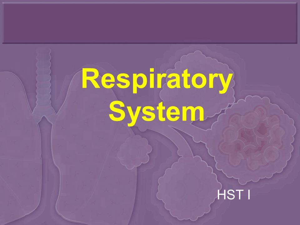 Respiratory System HST I