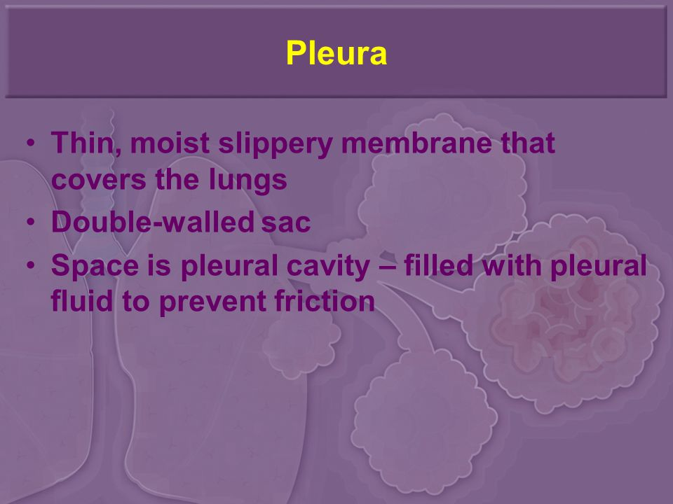 Pleura Thin, moist slippery membrane that covers the lungs