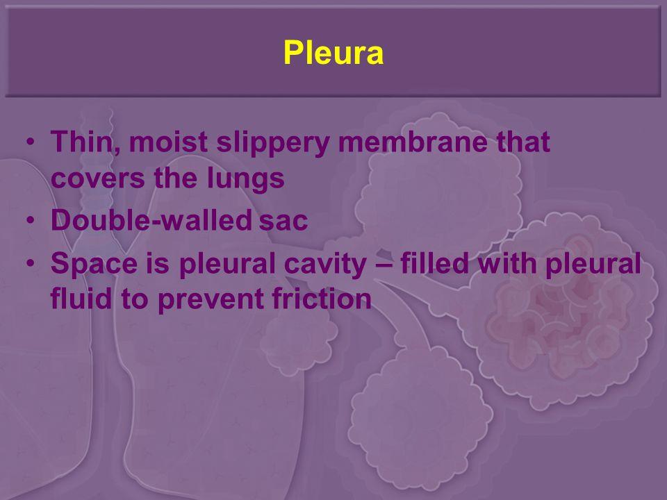 Pleura Thin, moist slippery membrane that covers the lungs
