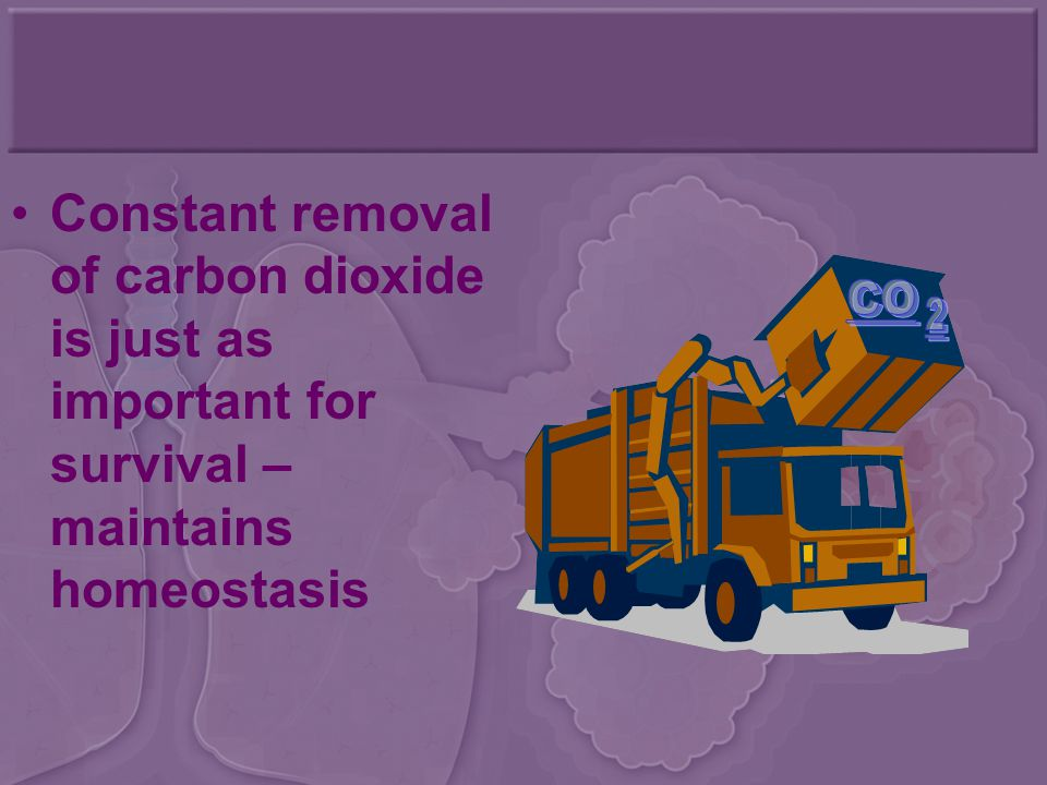 Constant removal of carbon dioxide is just as important for survival – maintains homeostasis