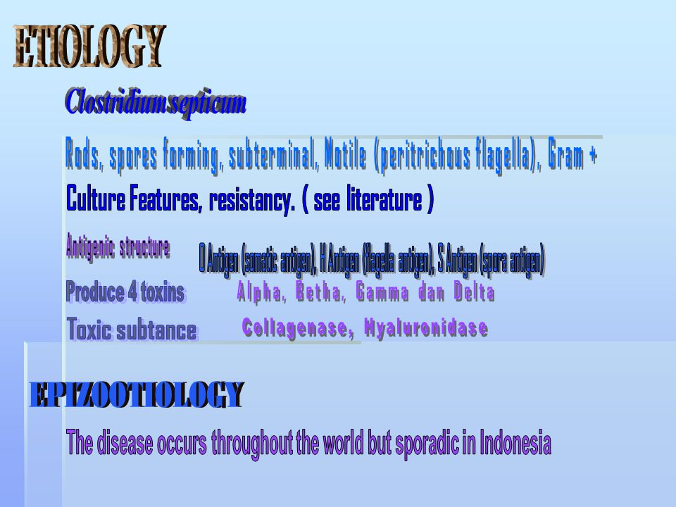 ETIOLOGY EPIZOOTIOLOGY Clostridium septicum Antigenic structure