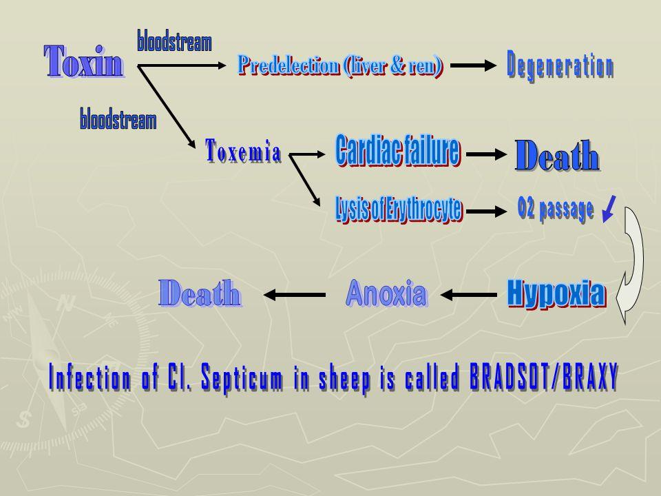 Predelection (liver & ren)