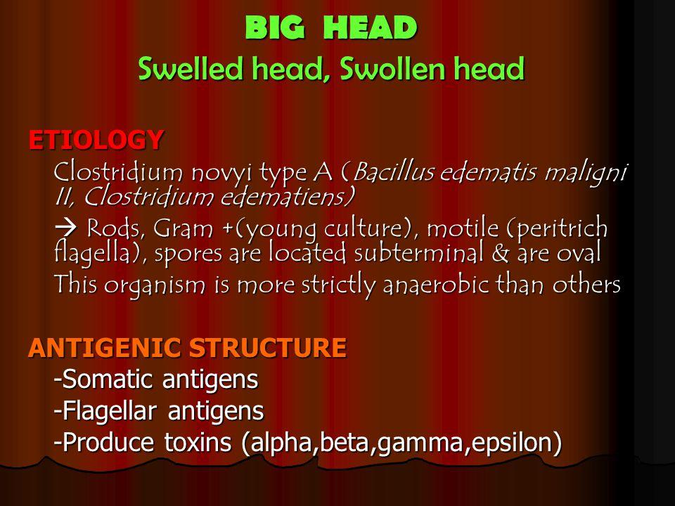 Swelled head, Swollen head