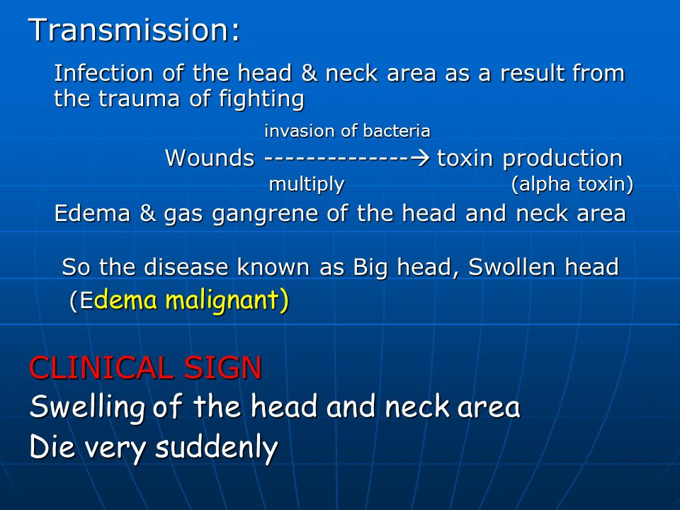 Swelling of the head and neck area Die very suddenly