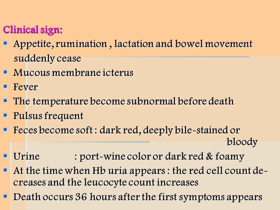 Clinical sign: Appetite, rumination , lactation and bowel movement. suddenly cease. Mucous membrane icterus.