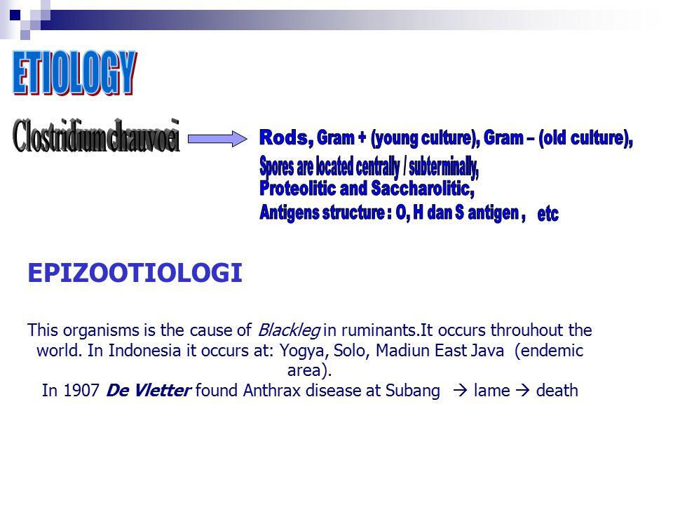 EPIZOOTIOLOGI ETIOLOGY Clostridium chauvoei