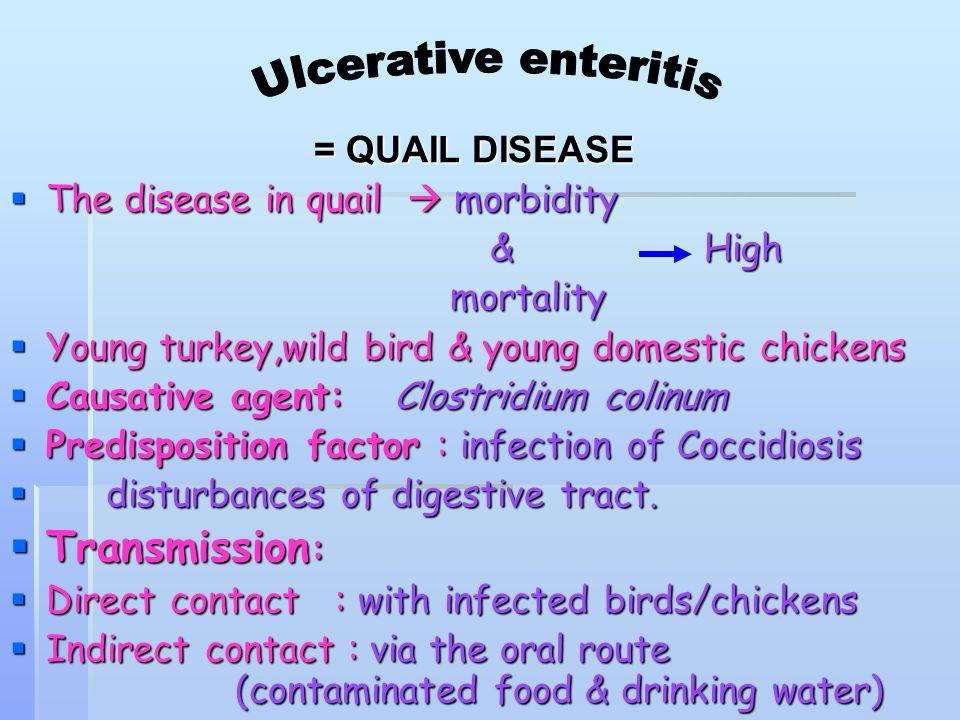 Ulcerative enteritis Transmission: = QUAIL DISEASE