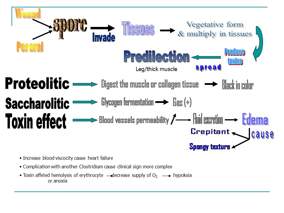 Vegetative form & multiply in tissues Proteolitic Saccharolitic