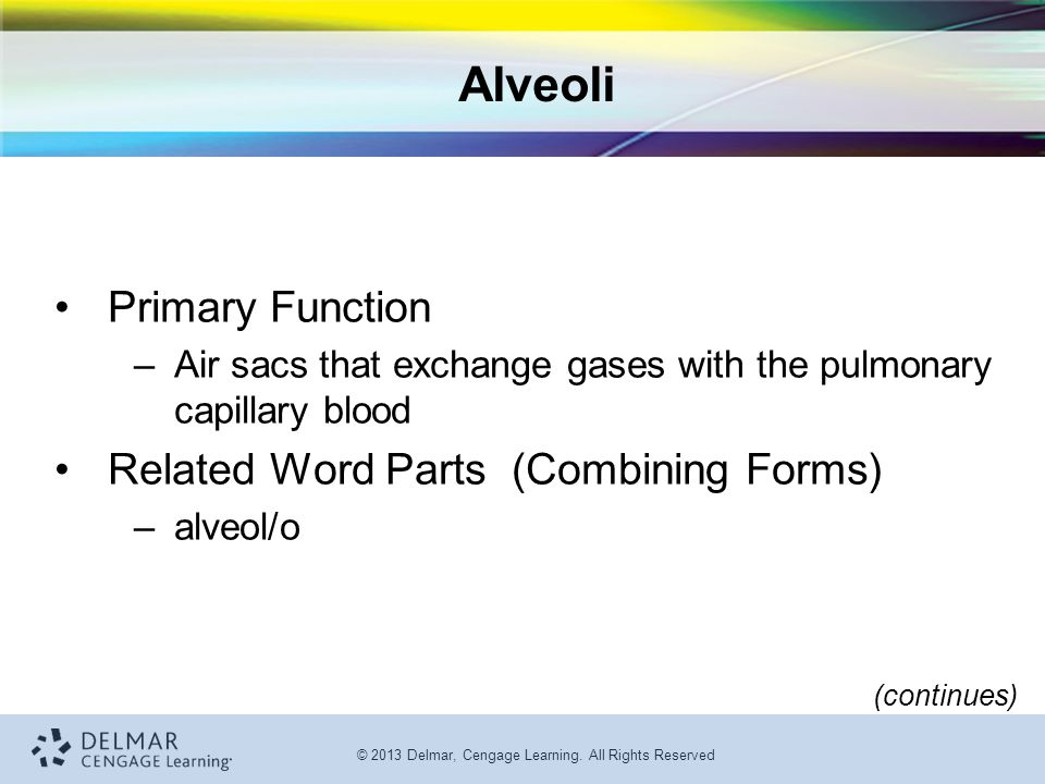 Alveoli Primary Function Related Word Parts (Combining Forms)