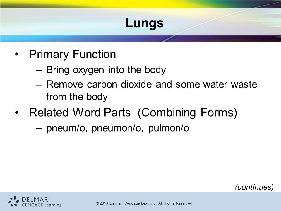 Lungs Primary Function Related Word Parts (Combining Forms)