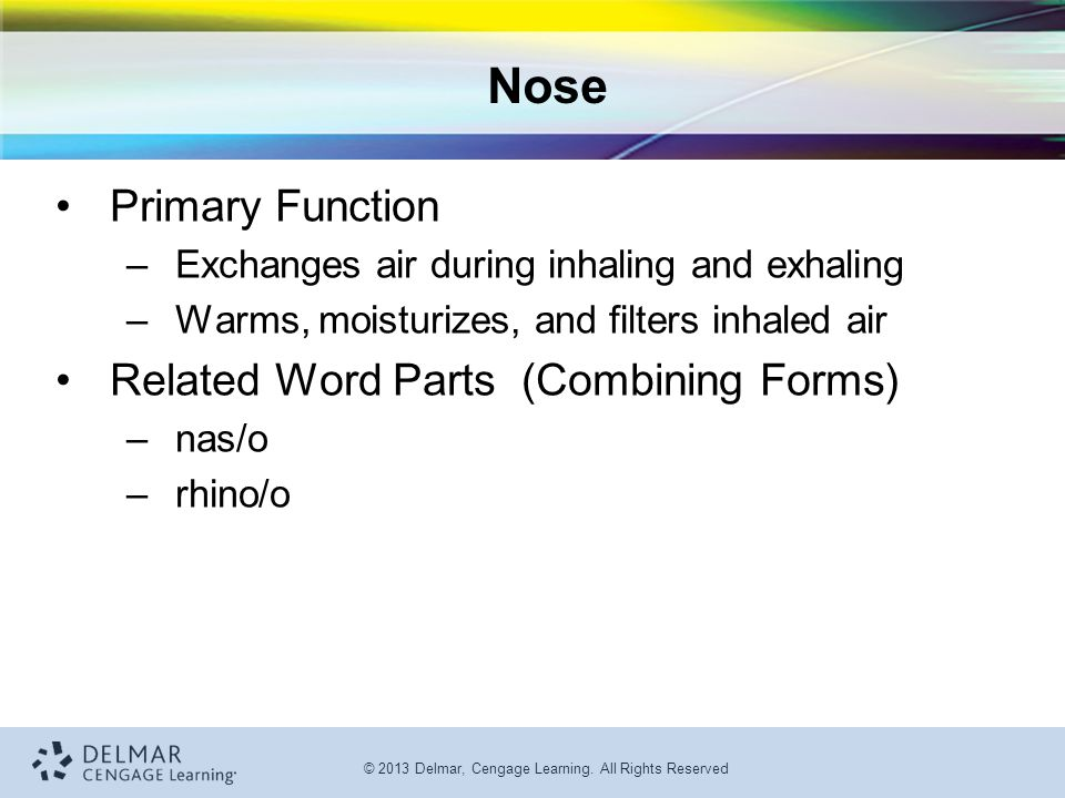 Nose Primary Function Related Word Parts (Combining Forms)