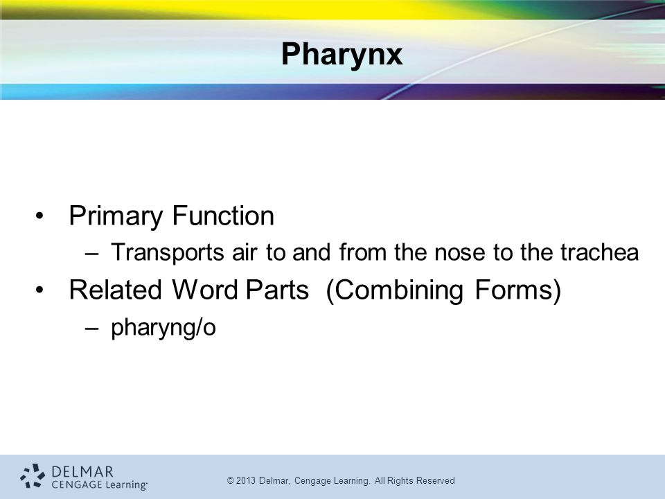 Pharynx Primary Function Related Word Parts (Combining Forms)