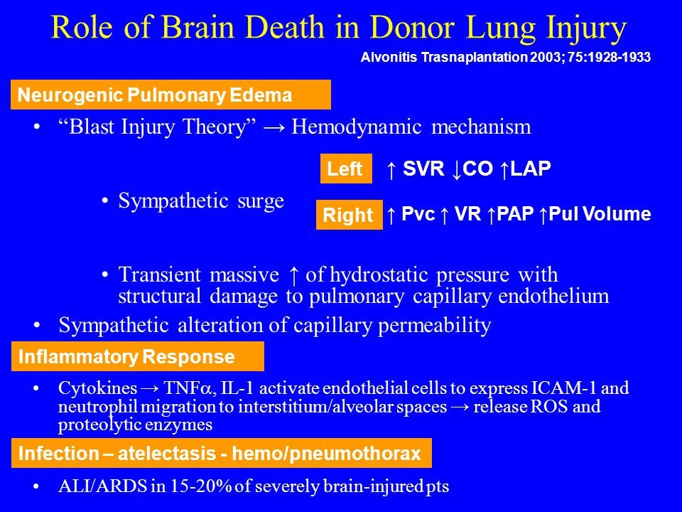 Role of Brain Death in Donor Lung Injury